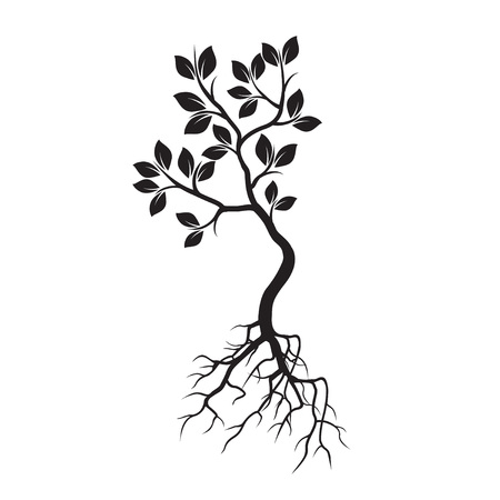 B; ack Tree with Roots. Vector Illustration. Illustration