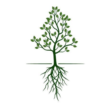 ルーツを持つ緑の木。ベクトルの図。
