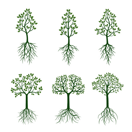 sketched shapes: Set green trees with roots. Vector Illustration. Illustration