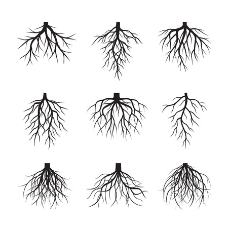 Set black Roots. Vector Illustration Vettoriali