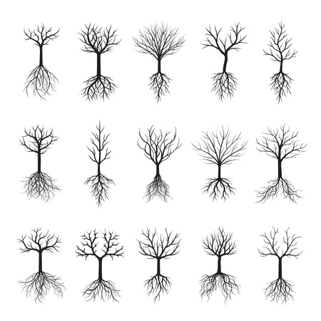 Set black Trees with Roots. Vector Illustration