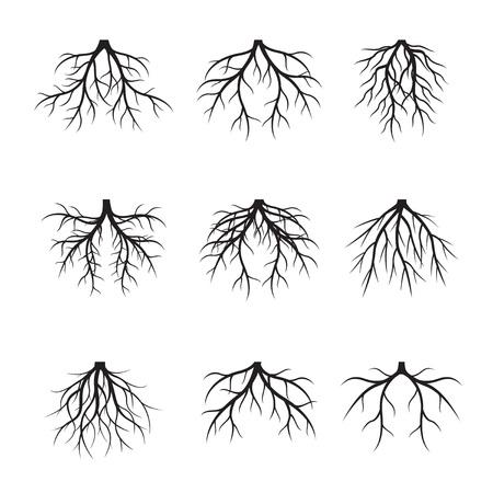 Stel zwarte wortels in. Vectorillustratie.