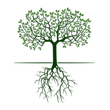 Arbre vert avec des racines. Illustration vectorielle
