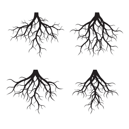 Set of black tree Roots. Vector Illustration Zdjęcie Seryjne - 83809904