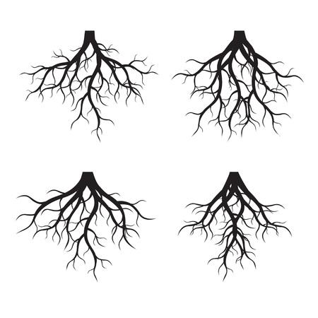 Zestaw czarnych korzeni drzew. Ilustracji wektorowych