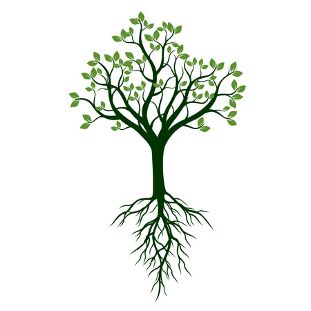 Green shape of Tree with Roots. Vector Illustration. Ilustracja
