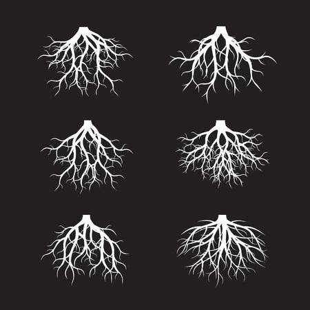Collection de racines blanches sur fond noir. illustration vectorielle Banque d'images - 84986209