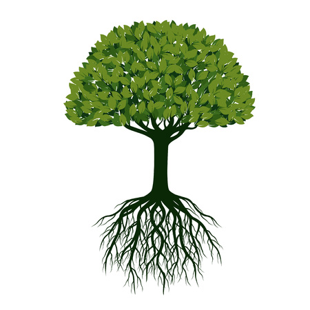 Green Vector Tree with Roots