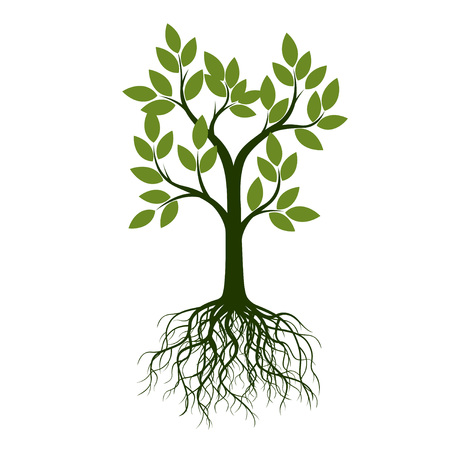 Green Tree with Leaves and Roots. Vector Illustration. Plants and Garden.