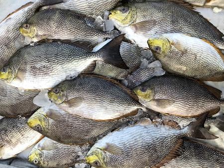 Fresh fish ot the market in Thailand.