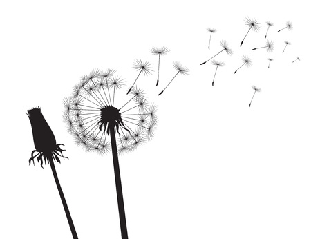 Black silhouette Dandelions on white background. Vector Illustration.