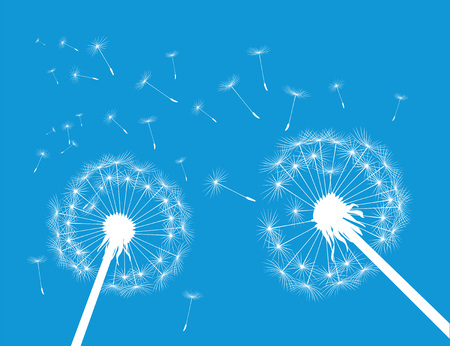 White silhouette Dandelions on blue background. Vector Illustration.