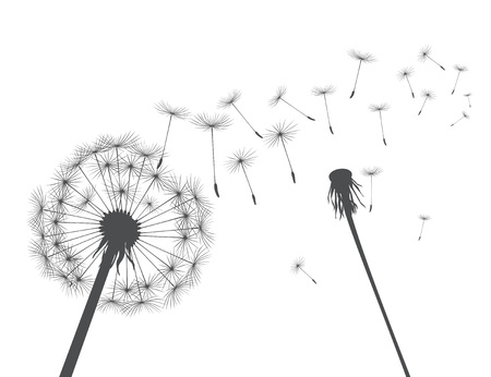 Grey  silhouette Dandelions on white background. Vector Illustration.