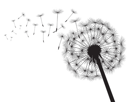Blacksilhouette Dandelions and white background. Vector Illustration.
