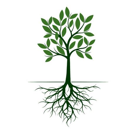 Árbol verde con raíz. Ilustración de vector. Planta en jardín.
