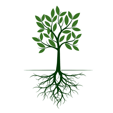 Green Tree with Root. Vector Illustration. Plant in garden.