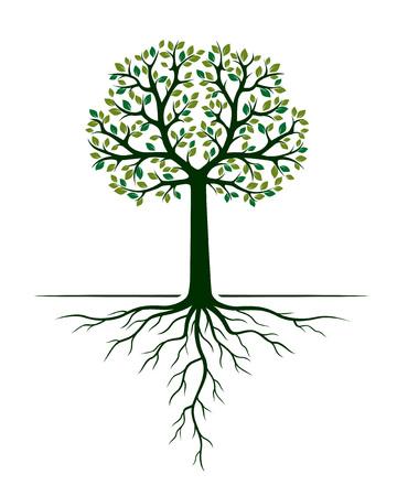 Árbol verde y raíces. Ilustración de vector. Planta y Jardín.