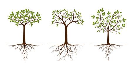 Árboles verdes con hojas. Ilustración de vector. Planta y Jardín.