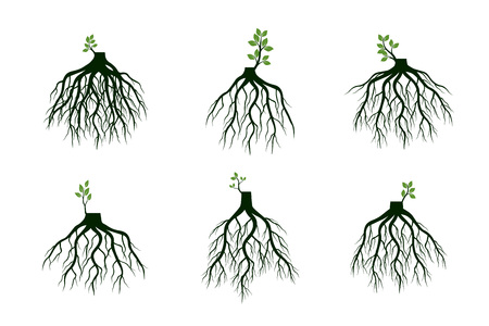 Set of Tree Roots and germinate limbs. Roots of plants. Outline Illustration.