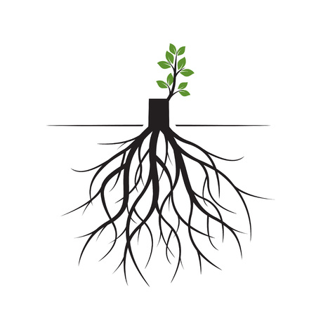 Tree Roots and germinate limb. Roots of plants. Outline Illustration. Vectores