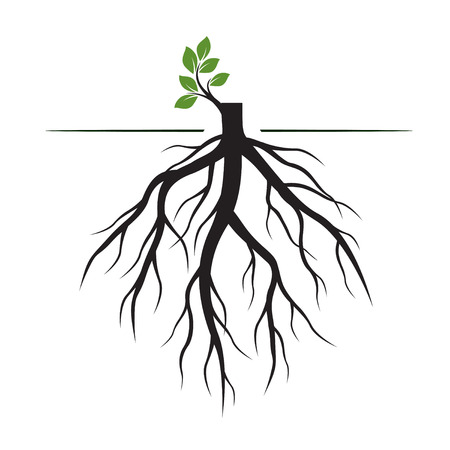Tree Roots and germinate limb. Roots of plants. Outline Illustration. 矢量图像