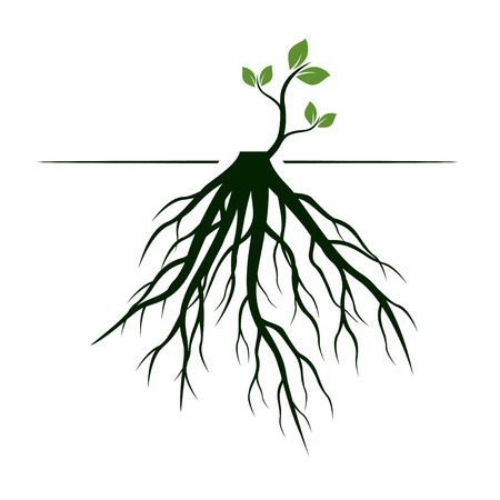 Tree Roots and germinate limb. Roots of plants. Outline Illustration. Vettoriali