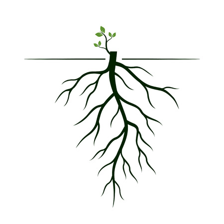 Tree Roots and germinate limb. Roots of plants. Outline Illustration.
