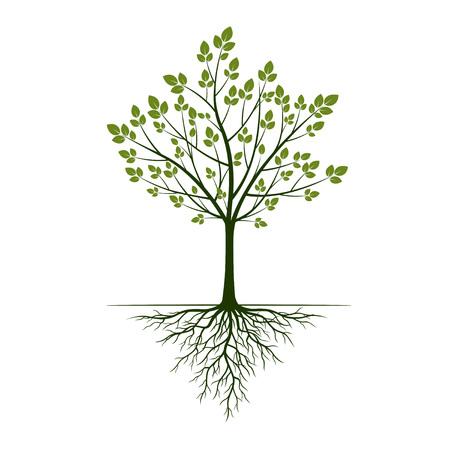 Árbol de primavera con hojas con raíces sobre fondo blanco. Ilustración de vector.