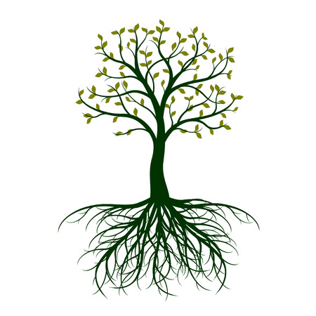 Spring Tree with leaves and Roots on white background. Vector Illustration.