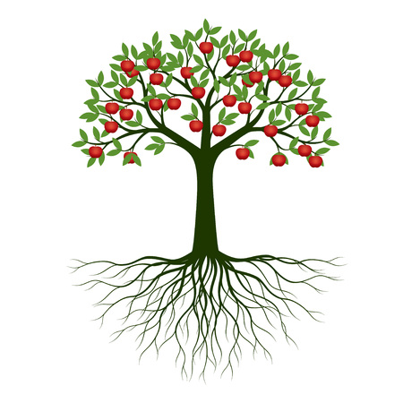 Green Spring Tree with Root and Apples. Vector Illustration. Plant in garden. Stock Illustratie