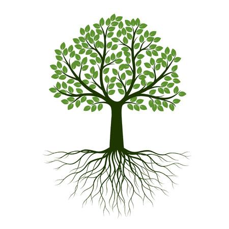 Árbol de primavera verde con raíz. Ilustración de vector. Planta en jardín.