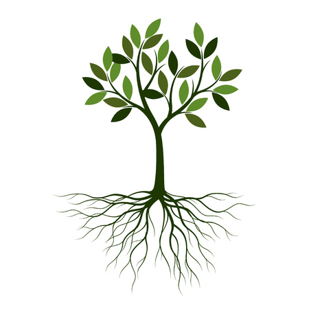 Green summer Tree with Roots. Vector Illustration. Plant in garden.