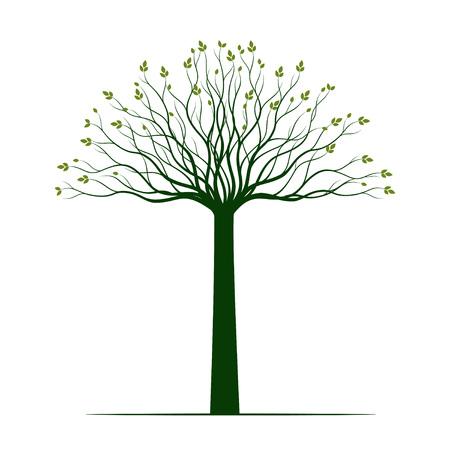 Spring Tree on white background. Vector Illustration. Garden plant.