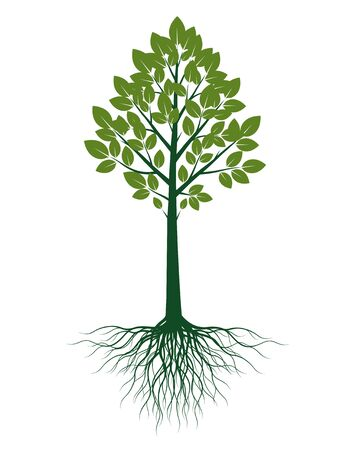 Green shape of Tree with Leaves and Roots. Vector outline Illustration. Plant in Garden. Banco de Imagens - 150289919