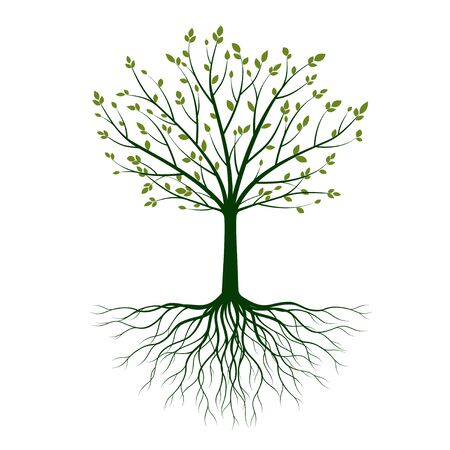 Green shape of Tree with Leaves and Roots. Vector outline Illustration. Plant in Garden.