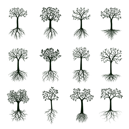 Black shap of Tree with Leaves and Roots. Vector Illustration. Plant and Garden.