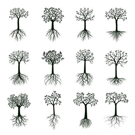 Czarny kształt drzewa z liśćmi i korzeniami. Ilustracja wektorowa. Roślina i ogród.