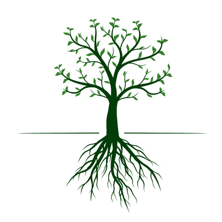 Green Tree with leaves and Rootson white background. Vector Outline Illustration.