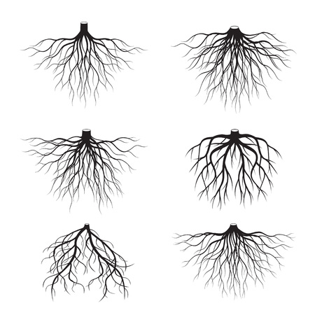 Set of Black Roots Tree. Vector Illustration. Ilustração
