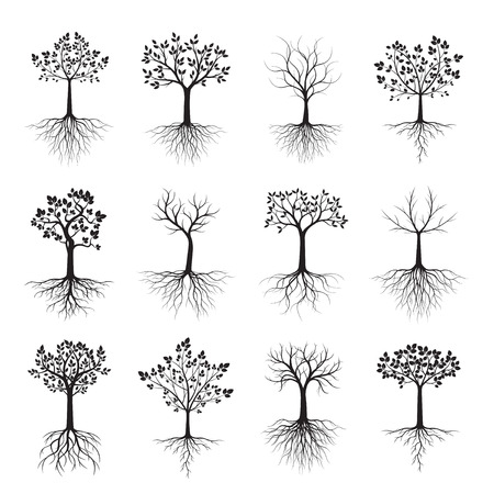 Satz schwarze Bäume mit Wurzeln. Vektor-Illustration. Pflanze und Garten. Vektorgrafik