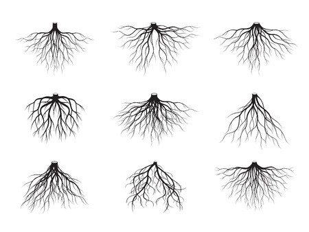 Set of Black Tree Roots. Vector Illustration. Plant and Garden. Ilustração