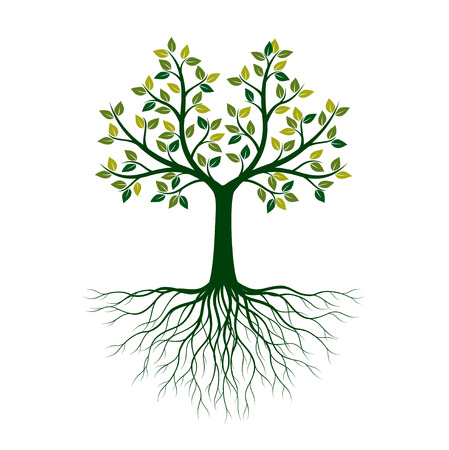 Green Tree of Life with Roots. Vector Illustration. Isolated object.  イラスト・ベクター素材