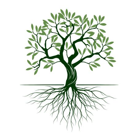 Grüner Olivenbaum mit Wurzeln auf weißem Hintergrund. Vektor-Illustration und Konzept-Piktogramm. Im Garten pflanzen. Vektorgrafik