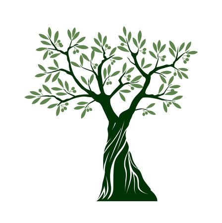 Green Isolated Olive Tree on white background. Vector Illustration and concept. Plant in garden.