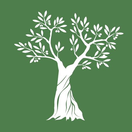 White Isolated Olive Tree on green background. Vector Illustration and concept. Plant in garden.