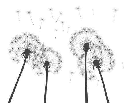 Shape of vector dandelion. Outline illustration.