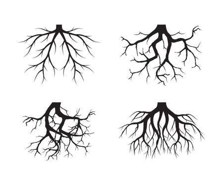 Black Tree Roots. Vector outline Illustration. Plants in Garden.