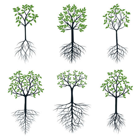 A Set of Trees with green Leaves and Roots. Vector outline Illustration. Plant in Garden.