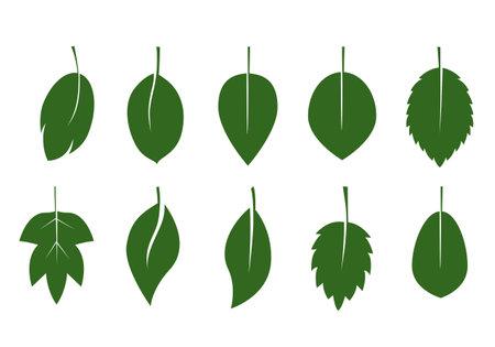 Set of green various Leaves. Vector Illustration. Vector Pattern. Plant in garden. 向量圖像