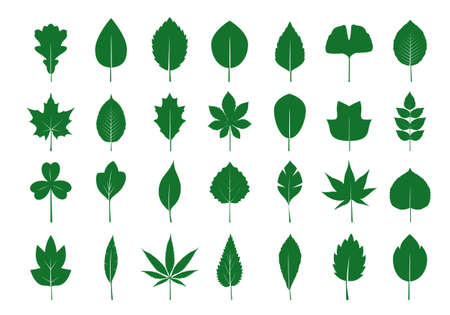 Set of green various Leaves. Vector icon. Vector Illustration. Plant in garden.